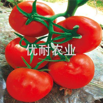 番茄种子-优粉番茄种子,优红番茄种子,高产茄子种子